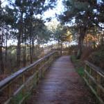 Zona bosque